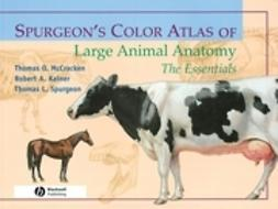 McCracken, Thomas O. - Spurgeon's Color Atlas of Large Animal Anatomy: The Essentials, ebook