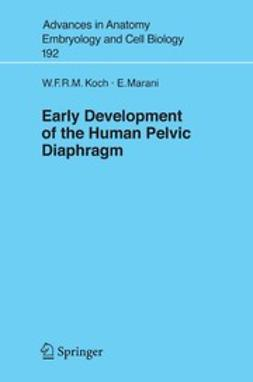 Early Development of the Human Pelvic Diaphragm