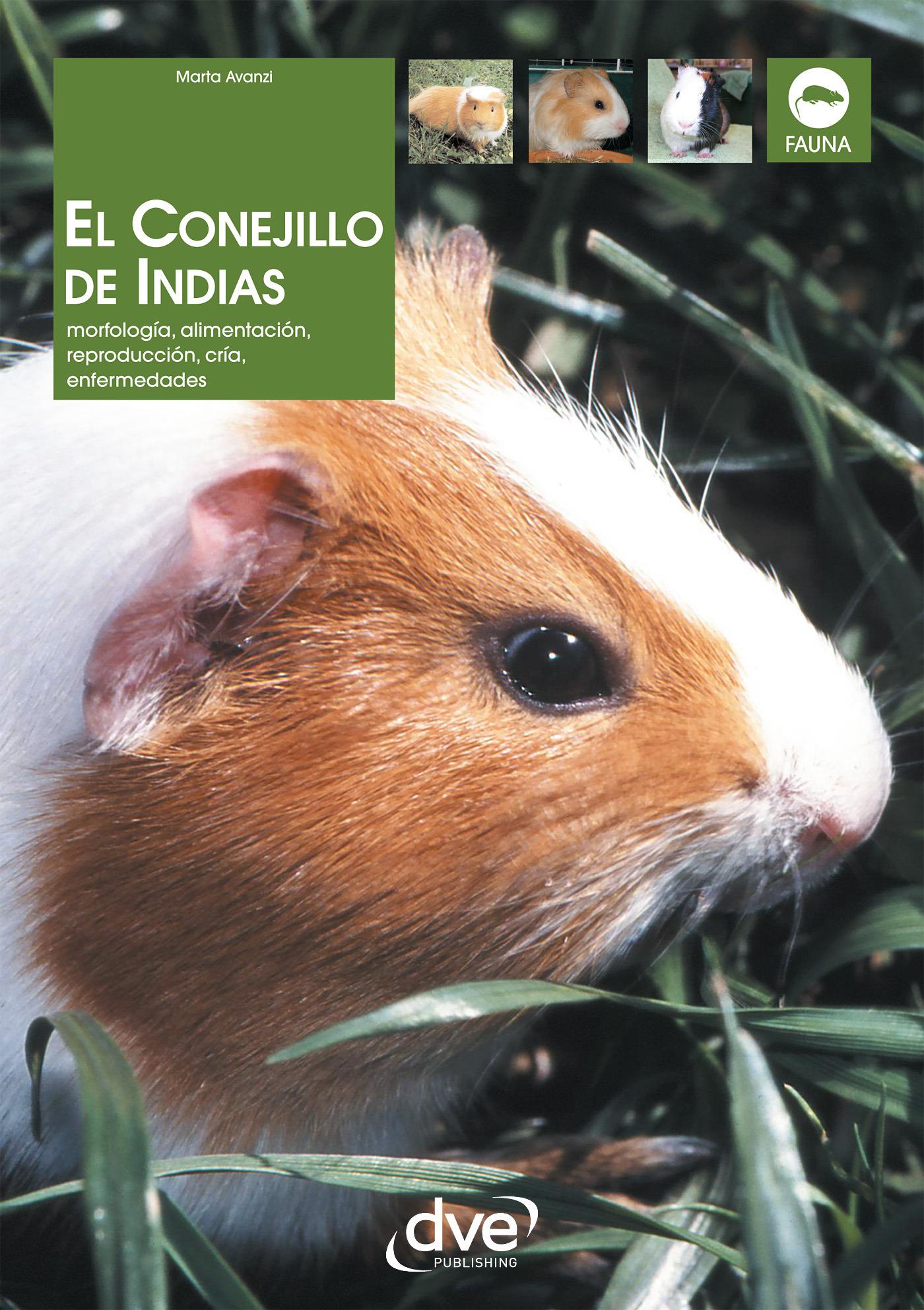 Avanzi, Marta - El Conejillo de Indias. Morfología, alimentación, reproducción, prevención y tratamiento de las enfermedades, ebook
