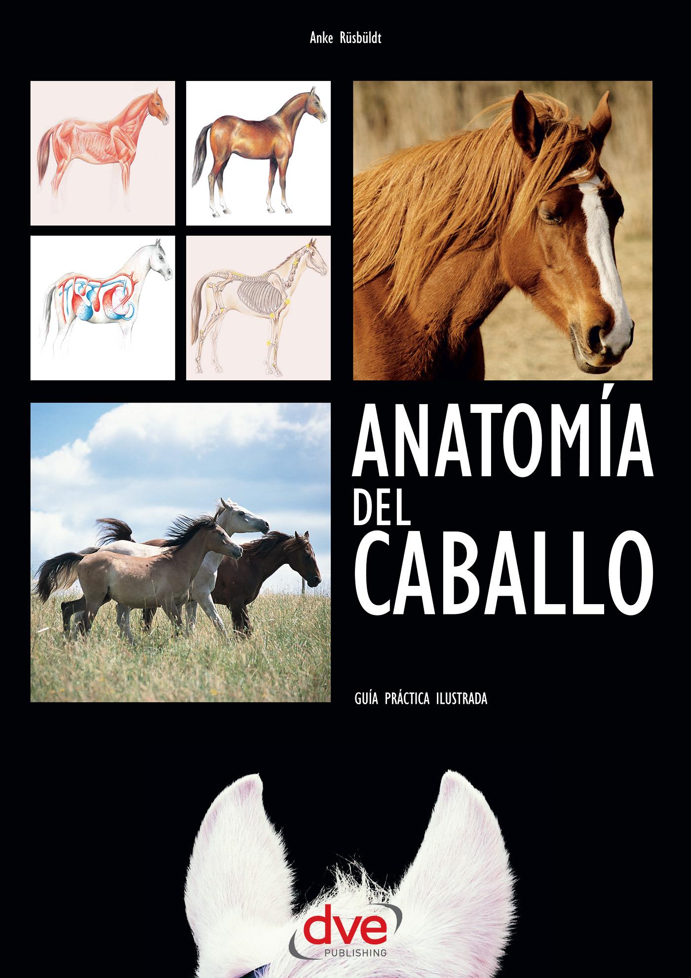 Rüsbüldt, Anke - Anatomía del caballo: Guía práctica ilustrada, ebook
