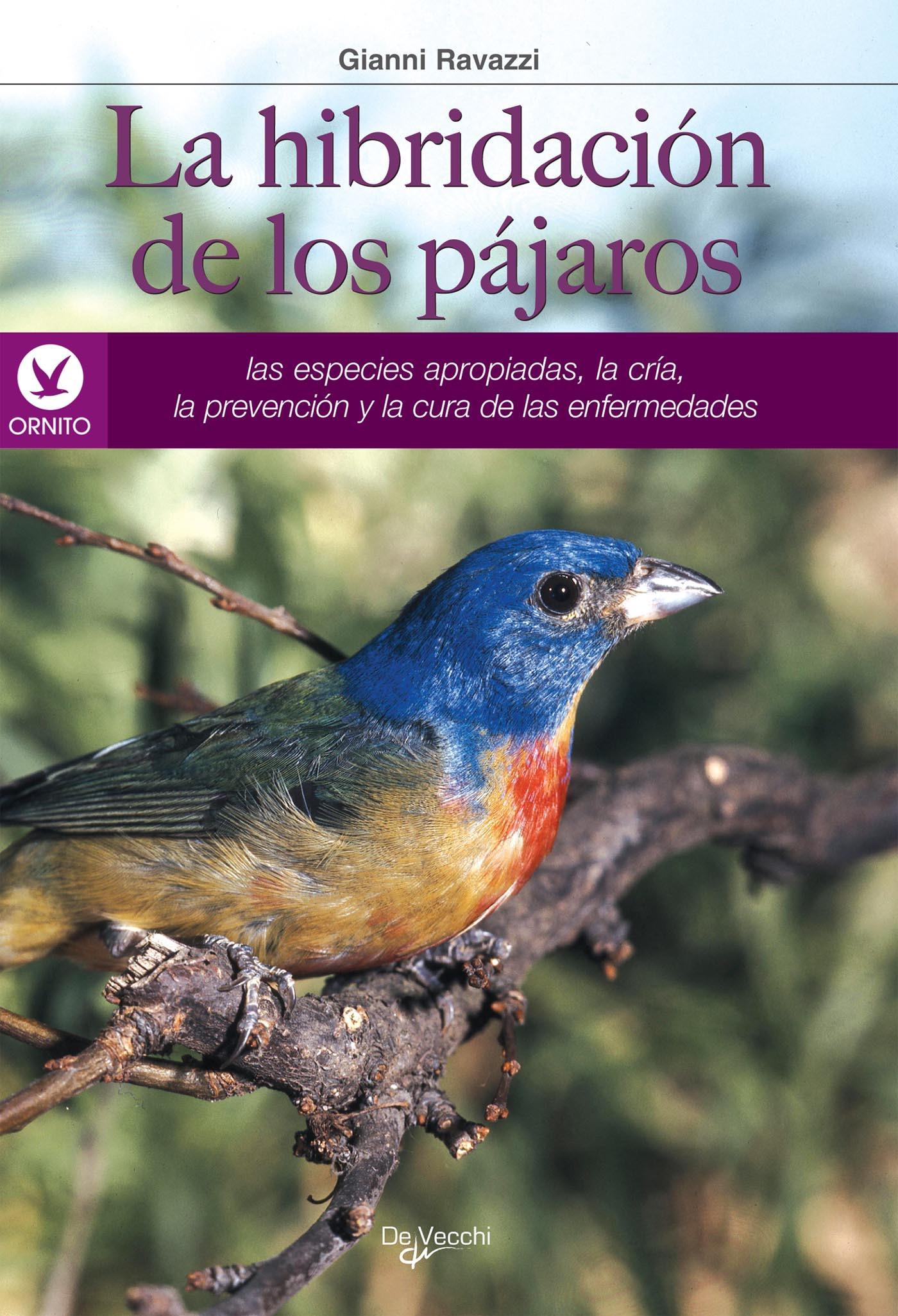 Ravazzi, Gianni - La hibridación de los pájaros, ebook