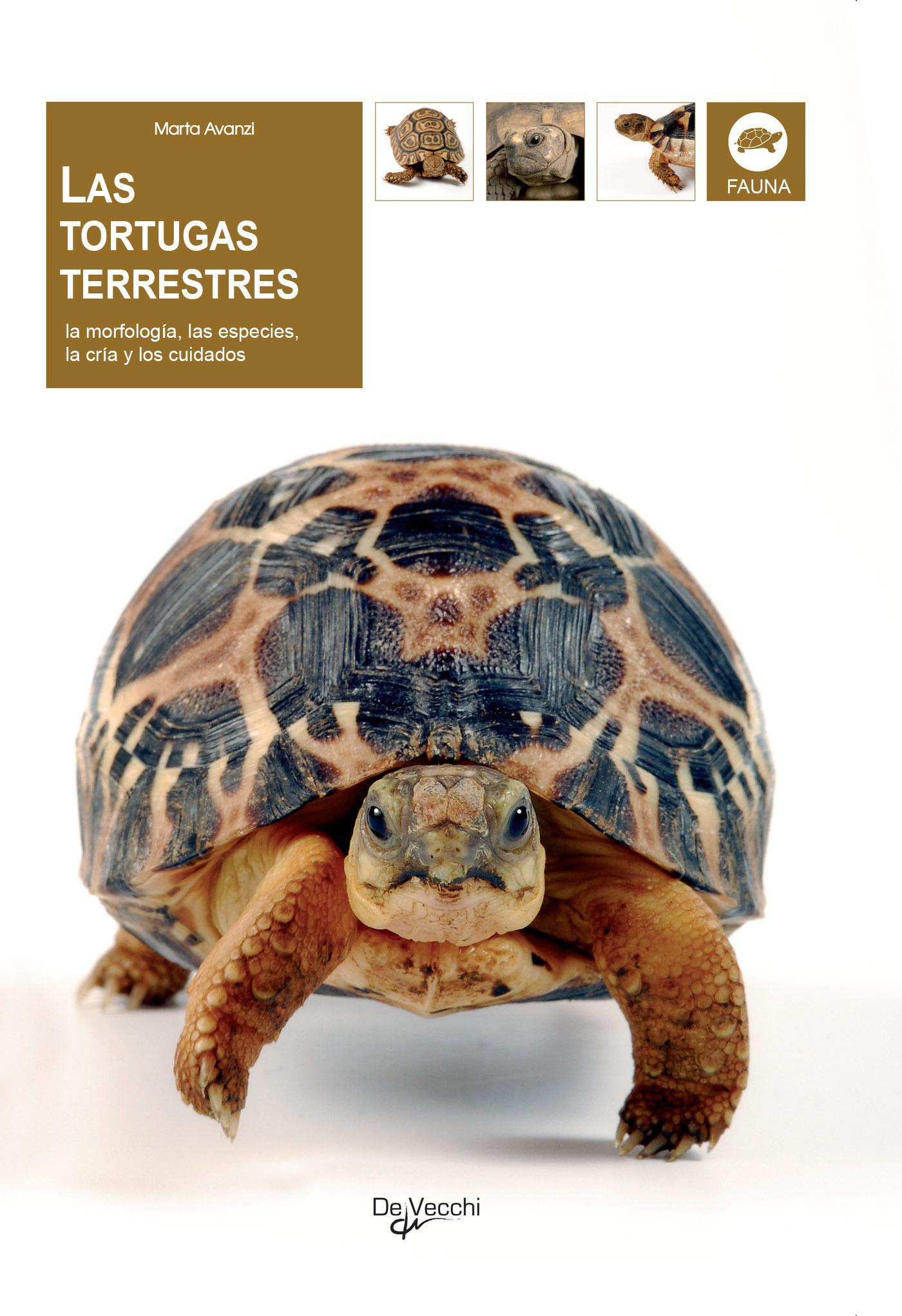 Avanzi, Marta - Las tortugas terrestres, ebook